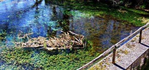 Lago di Posta Fibreno - riserva immagini