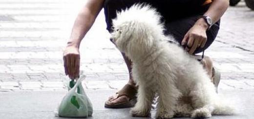 ©fotoFrosio2002 paletta cani cacca deiezioni canine via paleocapa 01072002 Savona