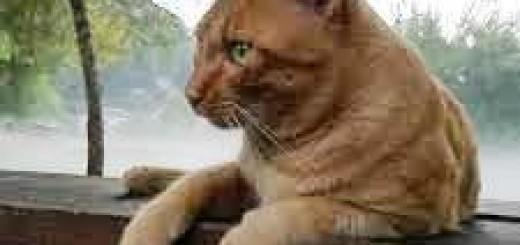 gattino de La mantide immagine 5